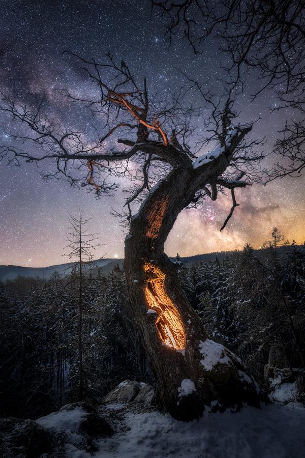 Staletý dub